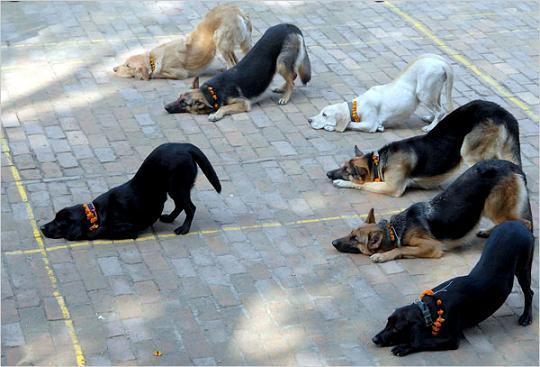 Подчиненноеповедение у собак